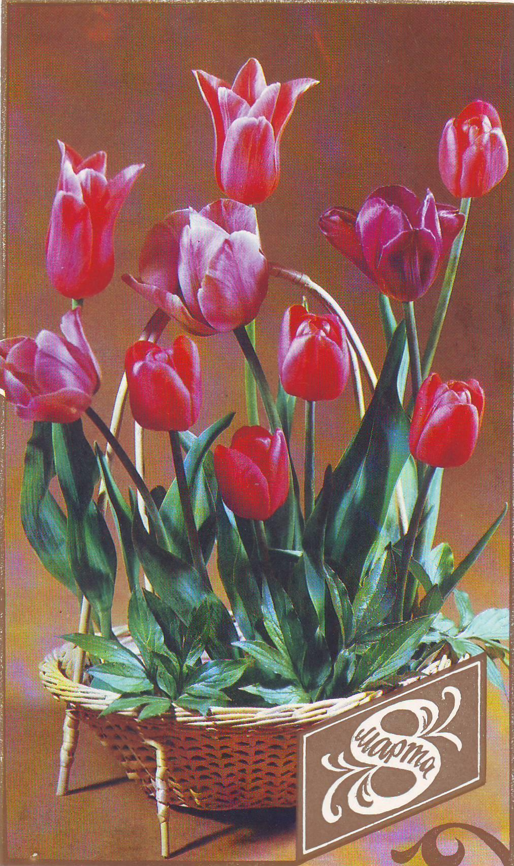 Тюльпаны 8 марта открытка