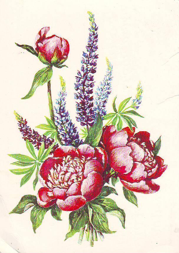 На открытках цветы ссср 98