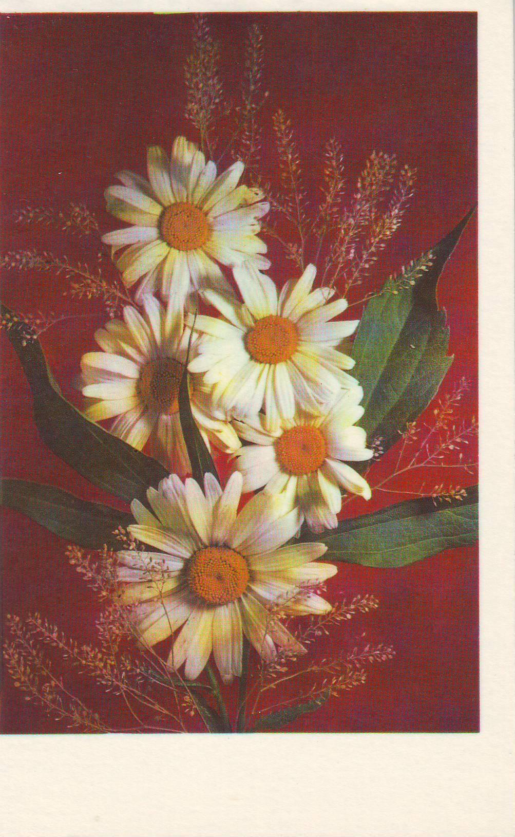 Цветы открытки советские смотреть в хорошем качестве, картинки