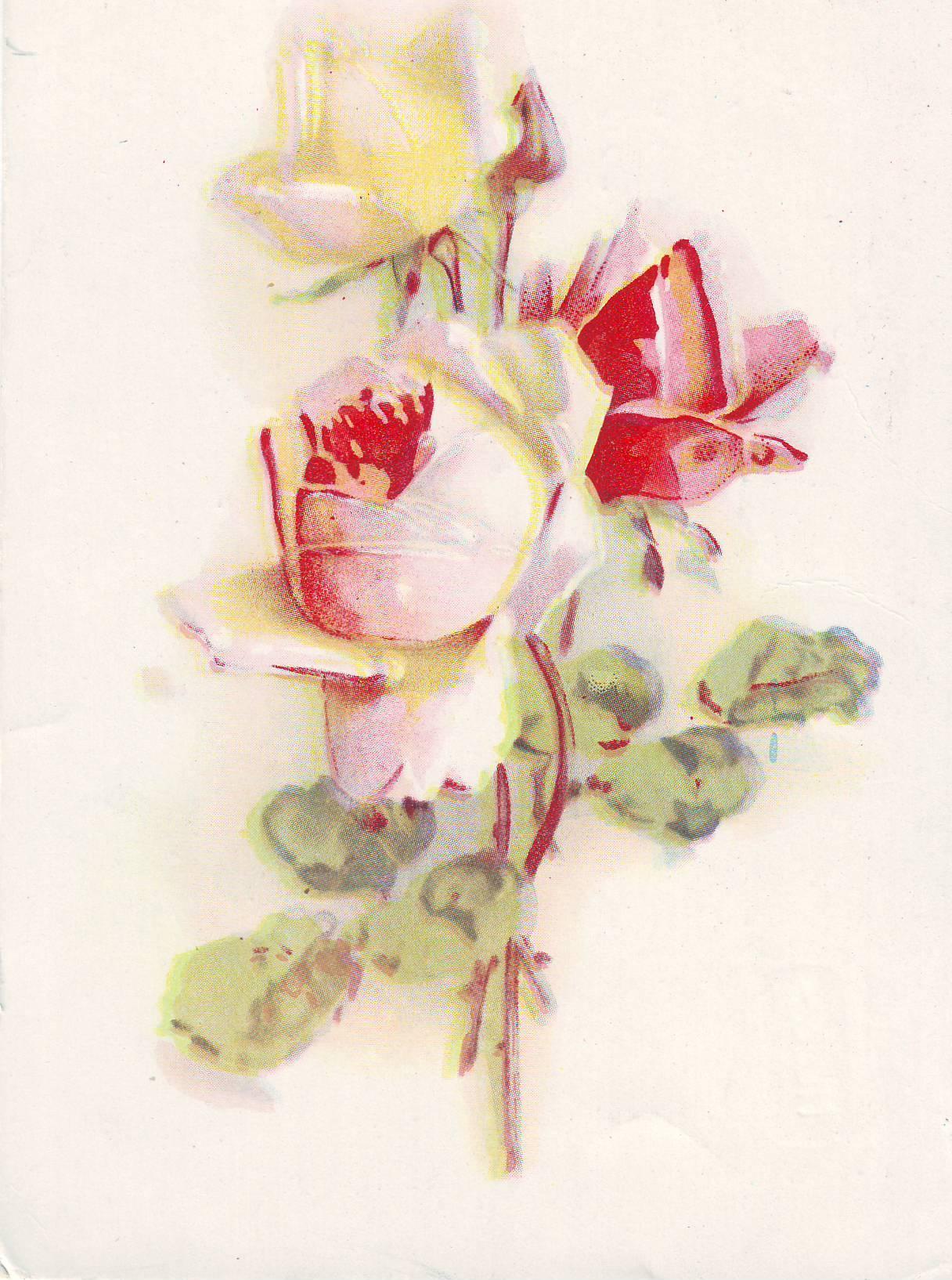 Днем, открытка болгарские розы