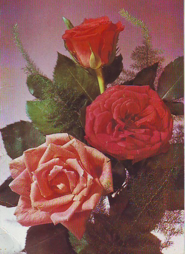 Приколы, открытки с цветами роза