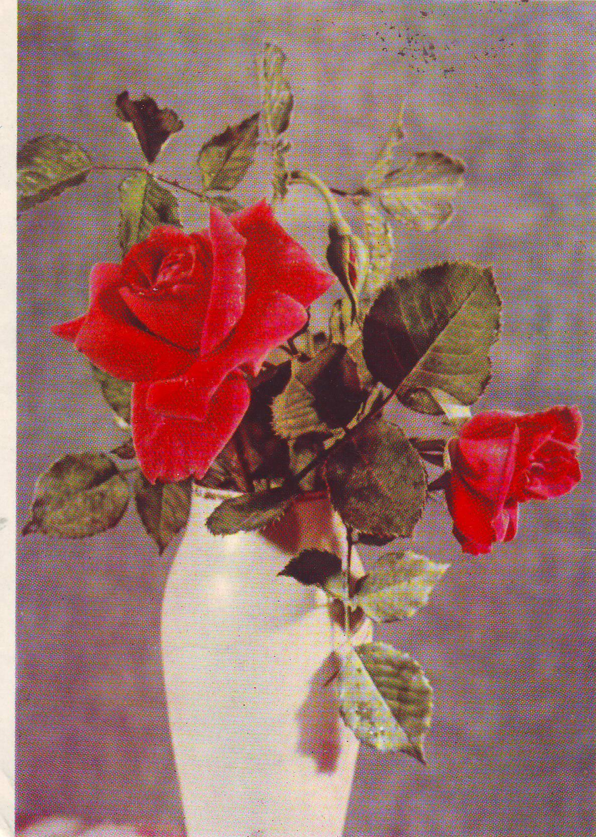 Розы в открытках в советское время