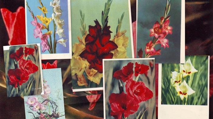 Открытки с цветами гладиолусами 903