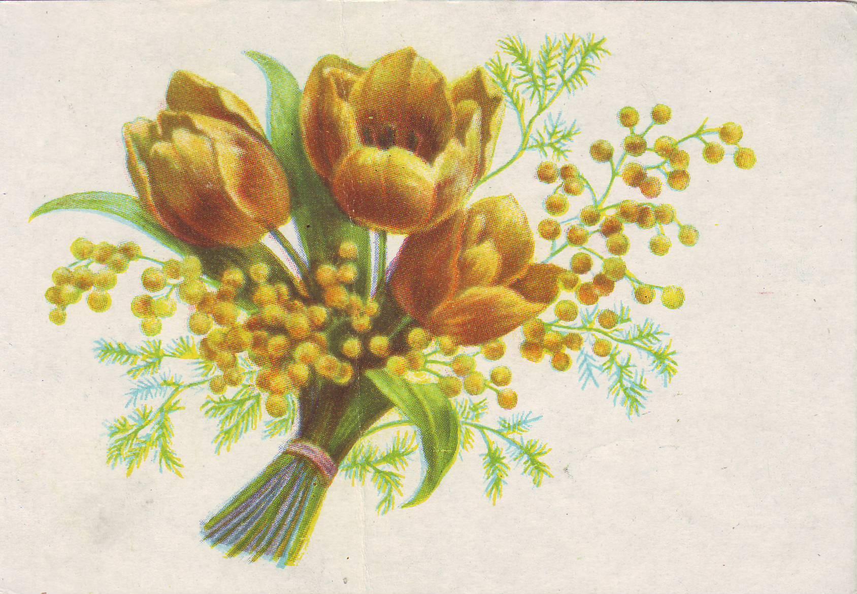 Советские открытки тюльпаны, показалось